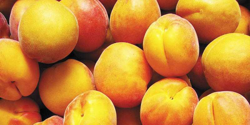 Заготовка абрикосов на зиму