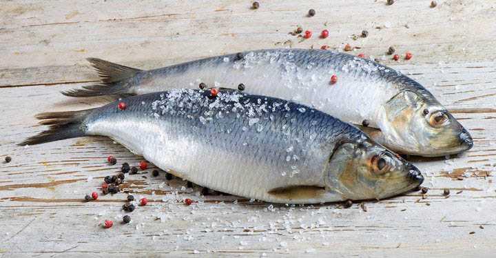 Хранение и разделка свежей рыбы
