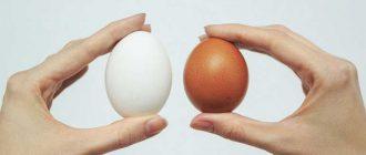 Как долго можно хранить сырые куриные яйца