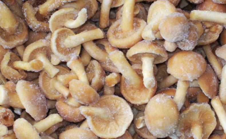 Способы заморозки свежих грибов