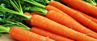 Как в холодильнике сохранить морковь свежей в любом виде