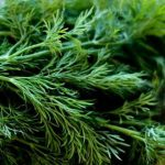 Как правильно хранить мяту в свежем, замороженном и сушёном виде