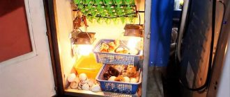 Как из холодильника сделать инкубатор для яиц своими руками по инструкции и чертежам
