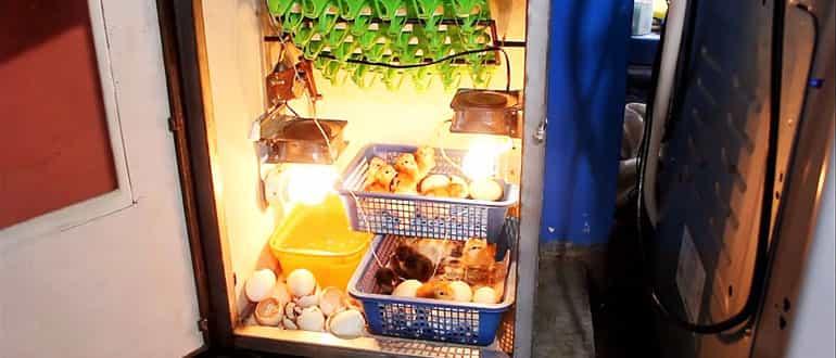 Как из холодильника сделать инкубатор своими руками по инструкции и чертежам