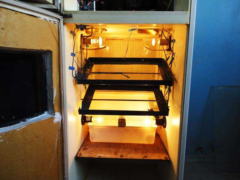 Преимущества самодельного инкубатора