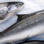 Как долго может храниться в холодильнике свежая, копчёная и вяленая рыба