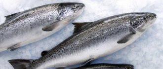 Как долго можно хранить рыбу в морозильной и холодильной камерах