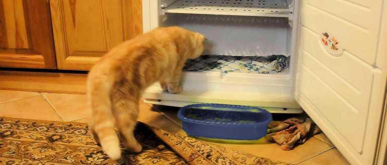 Почему снизу холодильника no frost течет вода, причины, что делать?