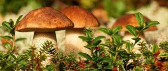 Особенности и сроки хранения свежих и готовых грибов в холодильнике