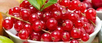 Как правильно заморозить смородину на зиму: правила хранения ягод