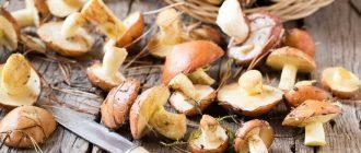 Как заморозить маслята в свежем и приготовленном виде