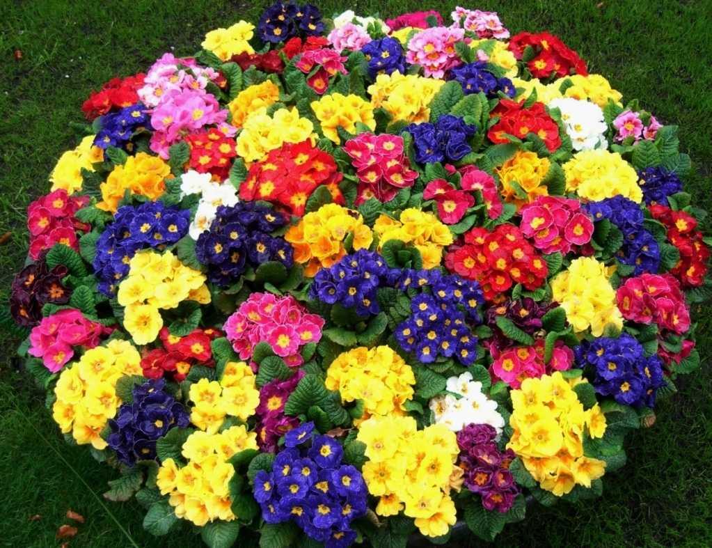 Хранение цветочных семян в бытовом холодильнике