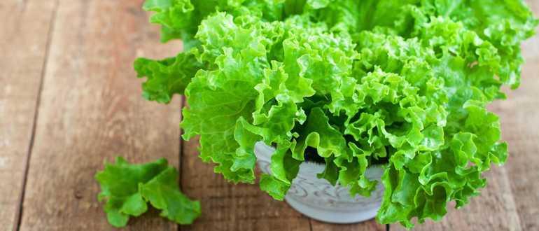 Как правильно хранить в холодильнике свежие листья салата