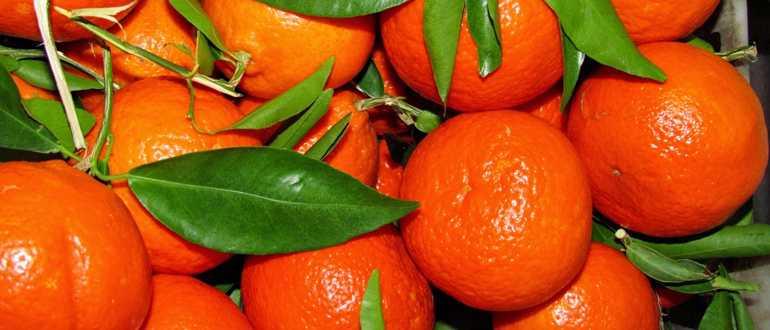 Срок хранения мандаринов в домашних условиях