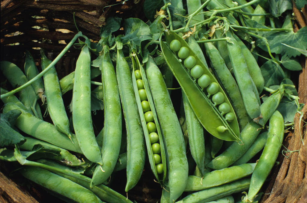 Хранение семян гороха в холодильнике