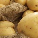 Как правильно хранить сырой и приготовленный картофель в холодильнике