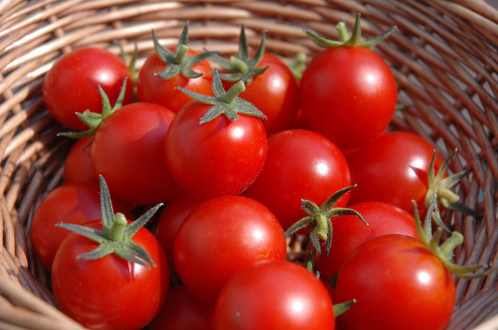 Хранение семян томата в бытовом холодильнике