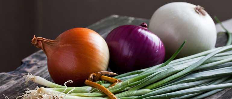 Можно ли заморозить репчатый лук в морозилке: лучшие способы заготовки овоща